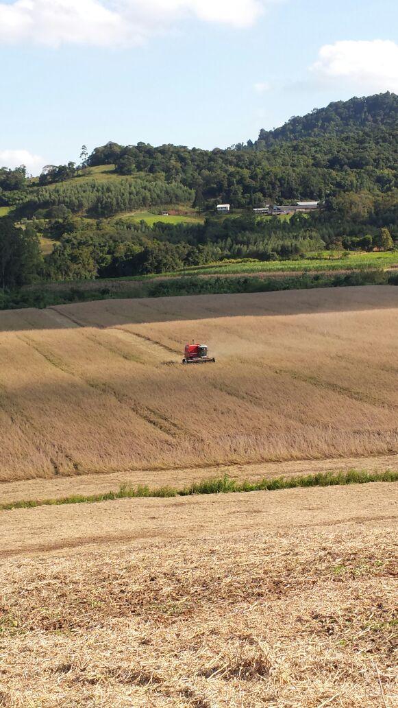 Imagem do Dia - Colheita de soja em Arroio do Meio (RS), do produtor André Müller