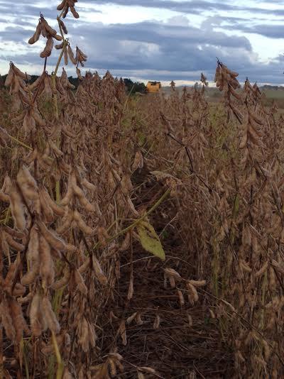Imagem do dia - Colheita da soja em Goianésia (GO), na Fazenda Bom Jesus, do produtor Rogério Sousa Gonçalves