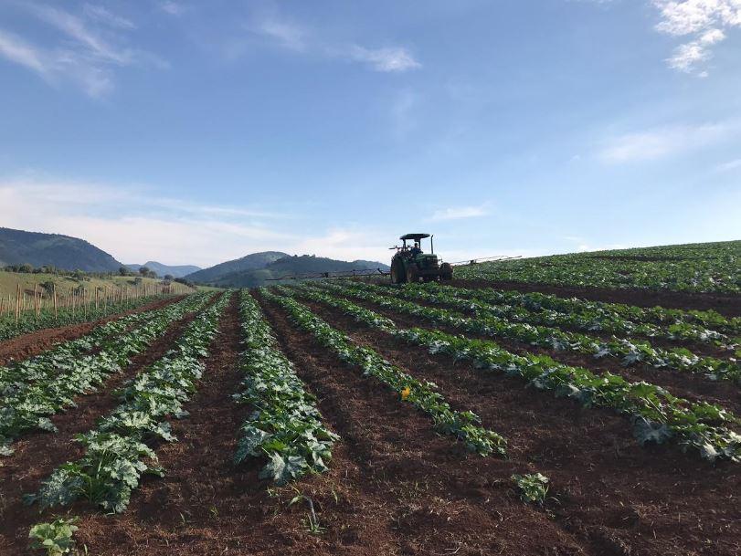 Plantação de abobrinha/tomate em Pouso Alegre (MG). Envio de Thomas Tafner