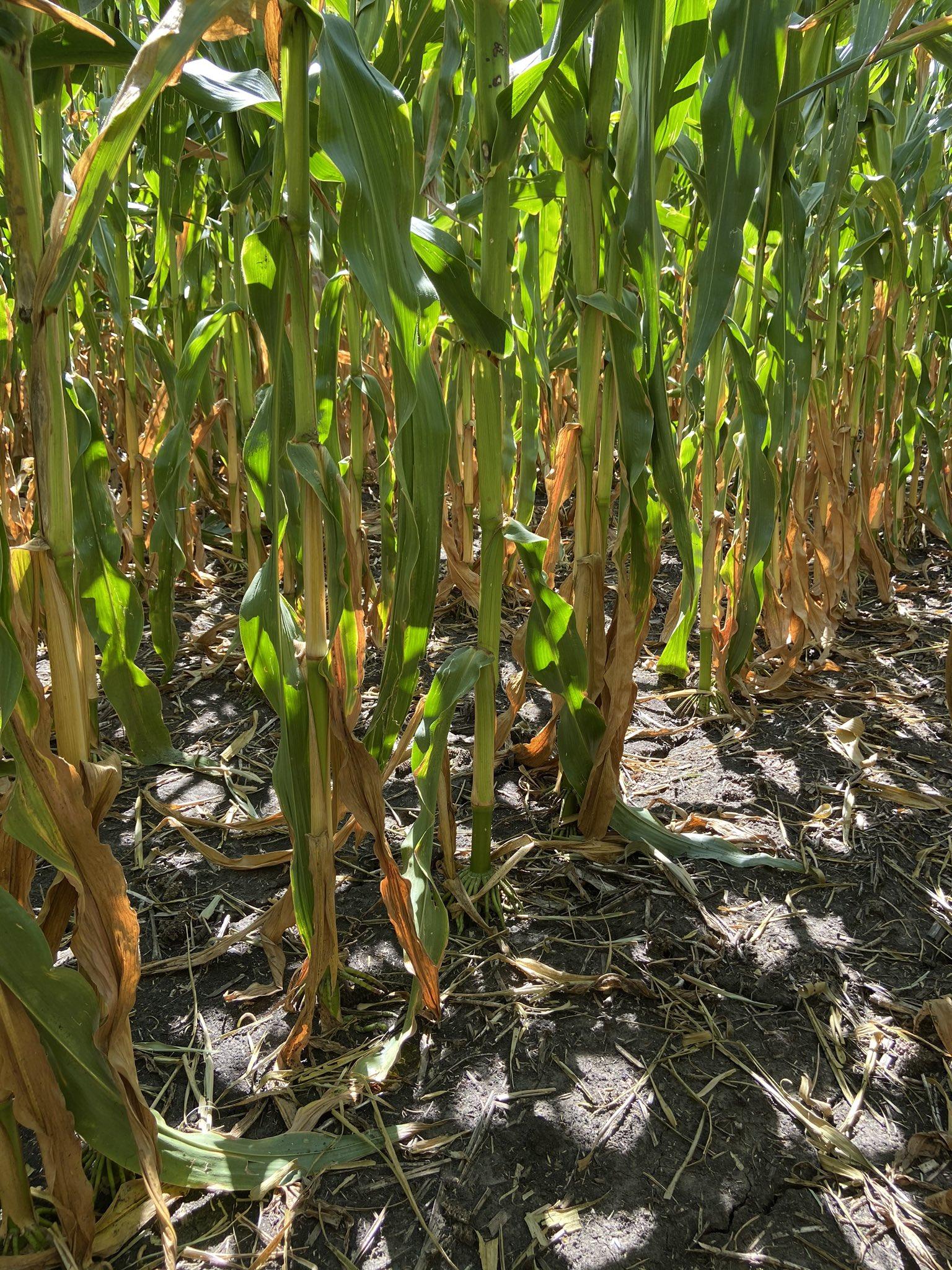 Iowa - Pro Farmer 2020- Foto: Karen Braun