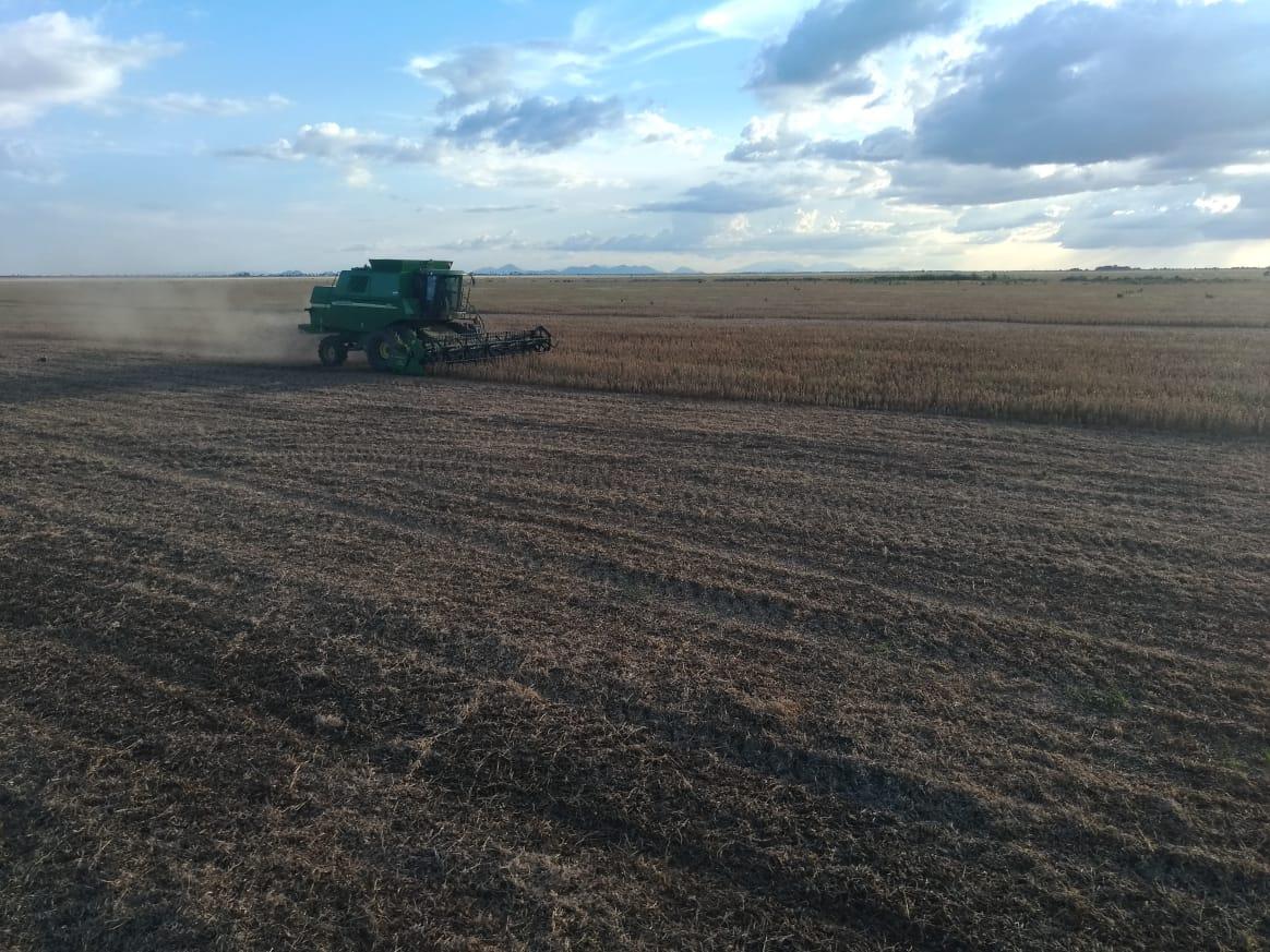 Colheita da soja na fazenda Kibacana em Boa Vista (RR). Envio de Matheus Ebert.