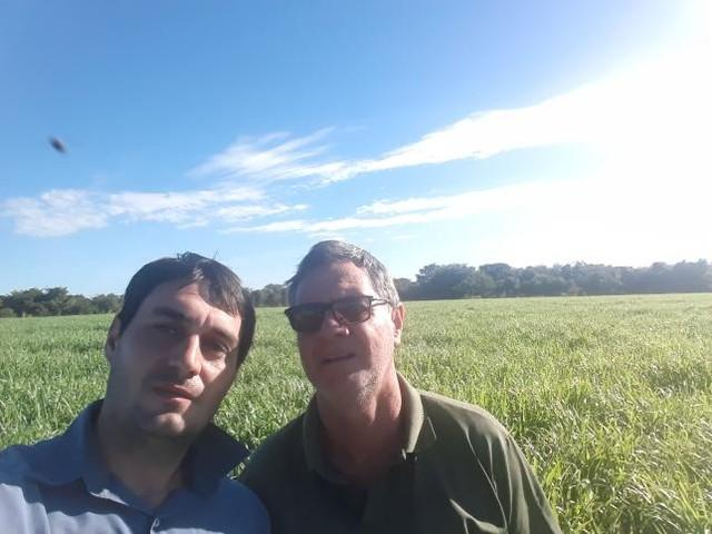 Integração lavoura pecuária, Fazenda Passo Fundo em Canarana (MT). Envio de Lucas e Marcos da Rosa