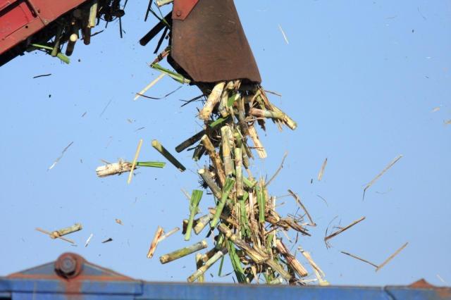 Colheita mecanizada de cana-de-açúcar na RMC - Foto: Embrapa