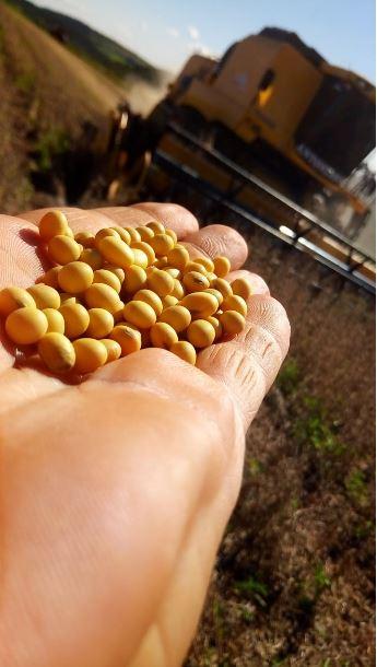 Fim de colheita no Paraná do Grupo Antoniasse. Envio de Romido Antoniasse