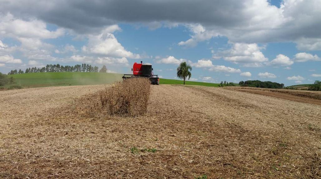 Final de colheita no Sítio Santa Rita - Santa Cruz em Chopinzinho (PR). Envio de Cleodi Magiero