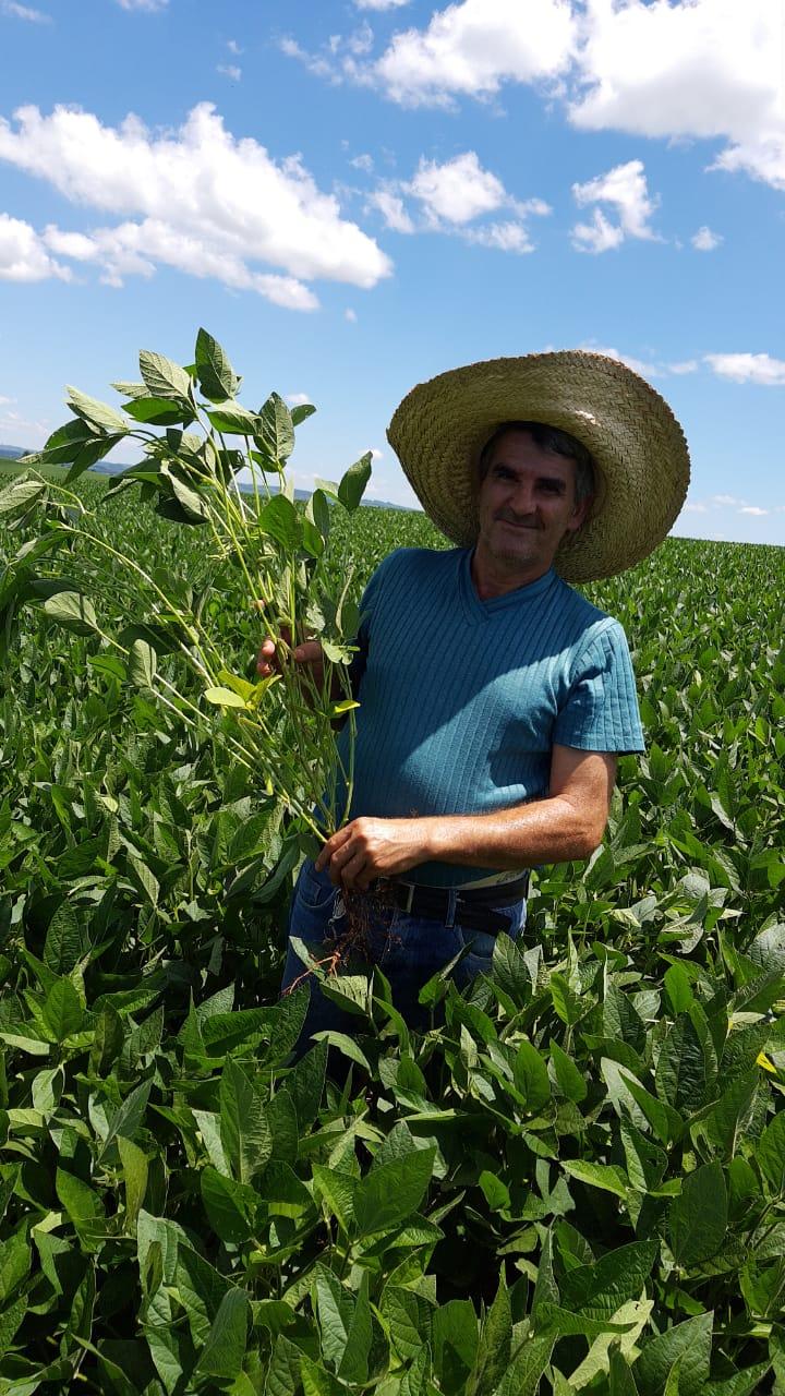 Lavoura de soja Variedade Raio do produtor Roberto Ongarato em Barra Funda (RS). Envio de Luciano Colombo