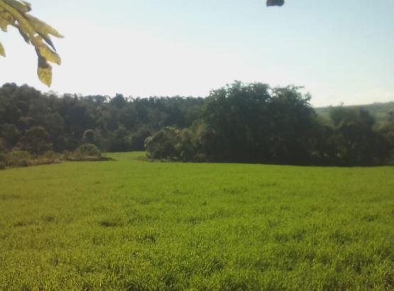 Limpa do trigo em Capanema (PR). Maicon Fernando Lopes