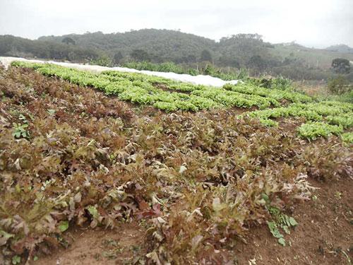 Hortaliças no Paraná 2
