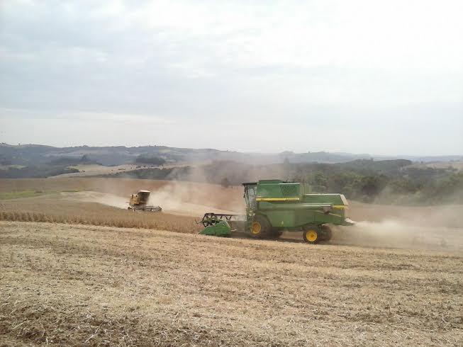 Imagem do dia - Colheita da soja em Áurea (RS). Envio de Ronaldo Kujavinski