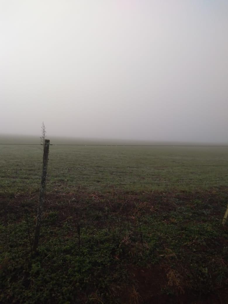 Frio na agropecuária Jacomina, em Cruz Alta (RS)
