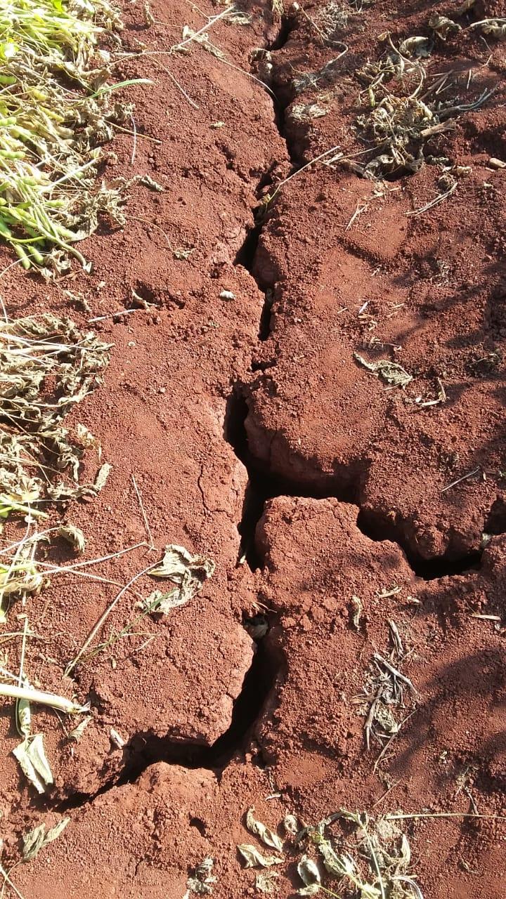 Rachaduras em área de soja devido a falta de chuvas em Nova Aurora (PR). Envio de David Clemente