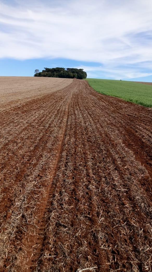 Foto da semeadura de Cevada em Ipiranga do Sul (RS). Envio do Eng. Agrônomo Volmir Peretti Junior.