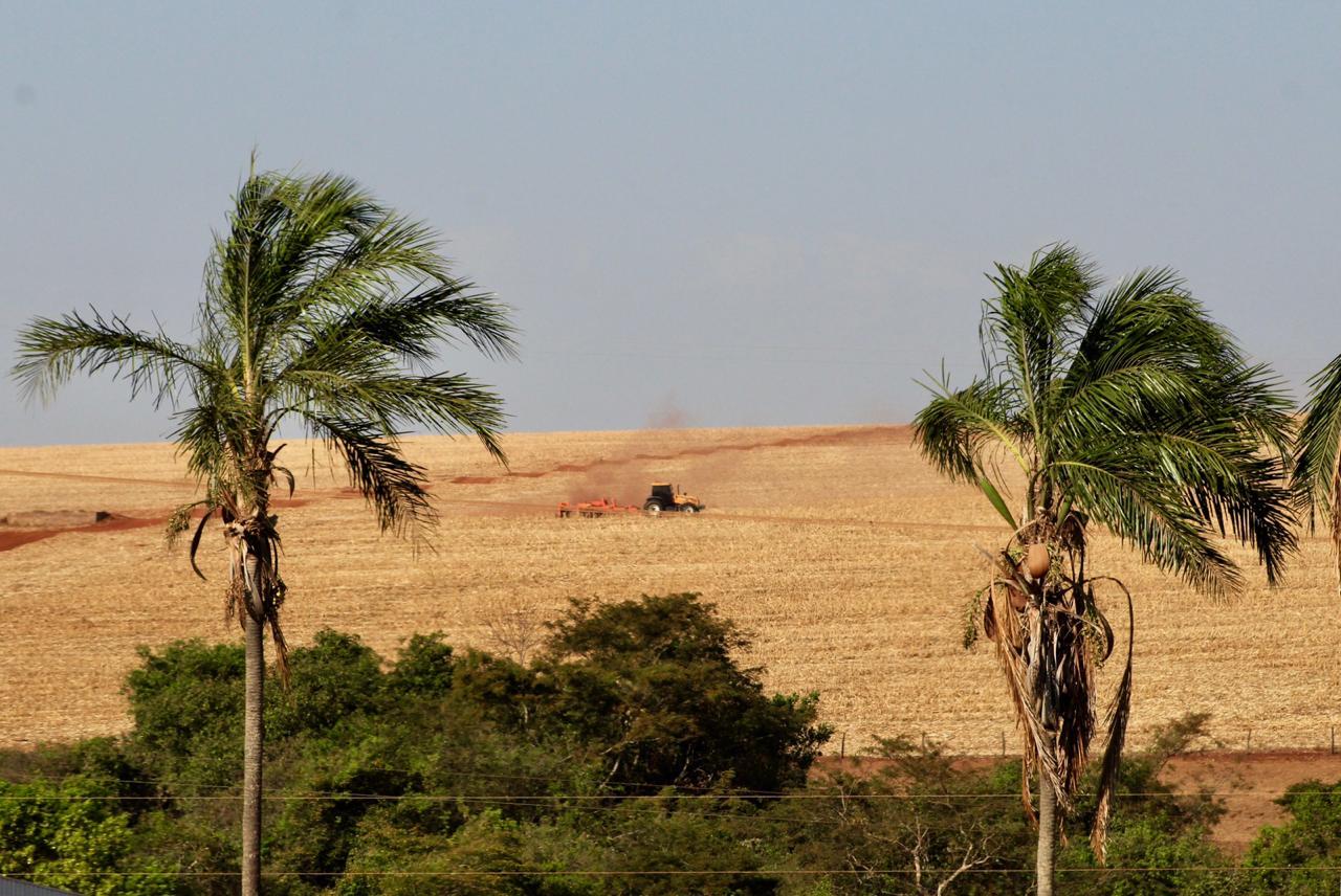 Campo em Rio Verde (GO). Envio de Alex Zamonaro.