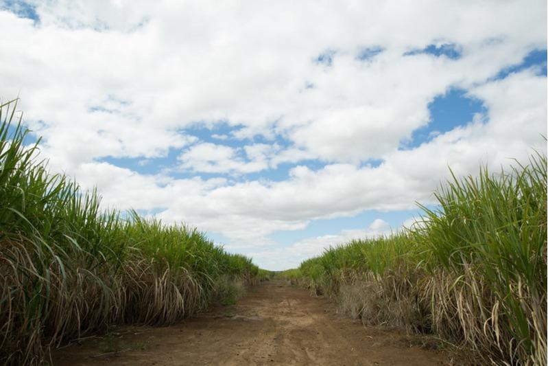 Cana-de-açúcar - Foto: CNA/Divulgação