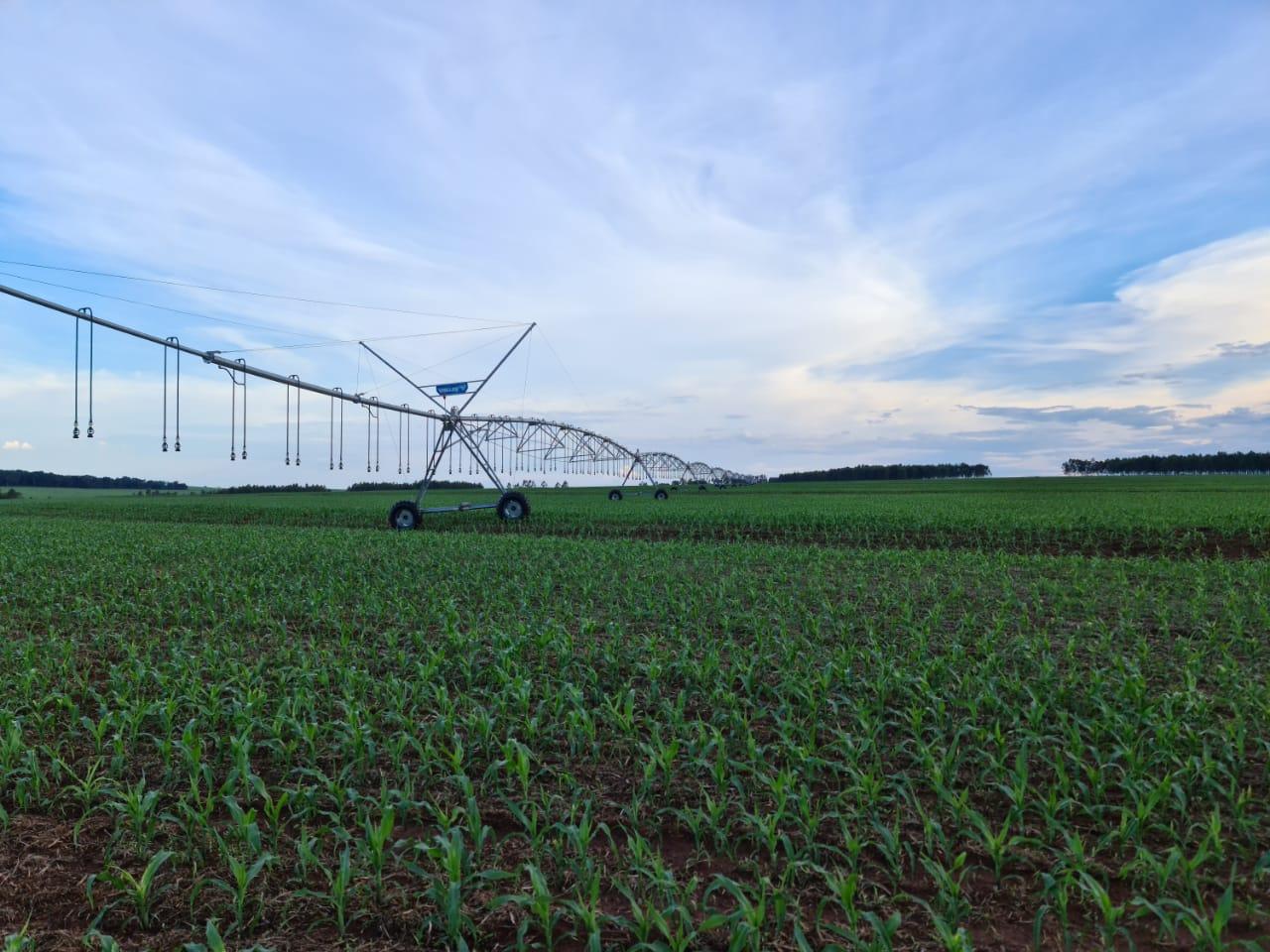 Irrigação da lavoura na Fazenda Reconquista Jatei (MS) - Nereu Cesar Medeiros