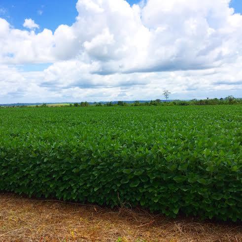 Lavoura de soja na região de Chupinguaia (RO). Foto do produtor rural, Eduardo Sartor.