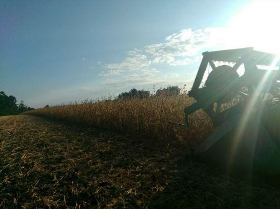 Colheita de soja na propriedade de Cleomar Techio em Boa Vista do Incra (RS). Envio de Tiago Techio - Técnico Agrícola