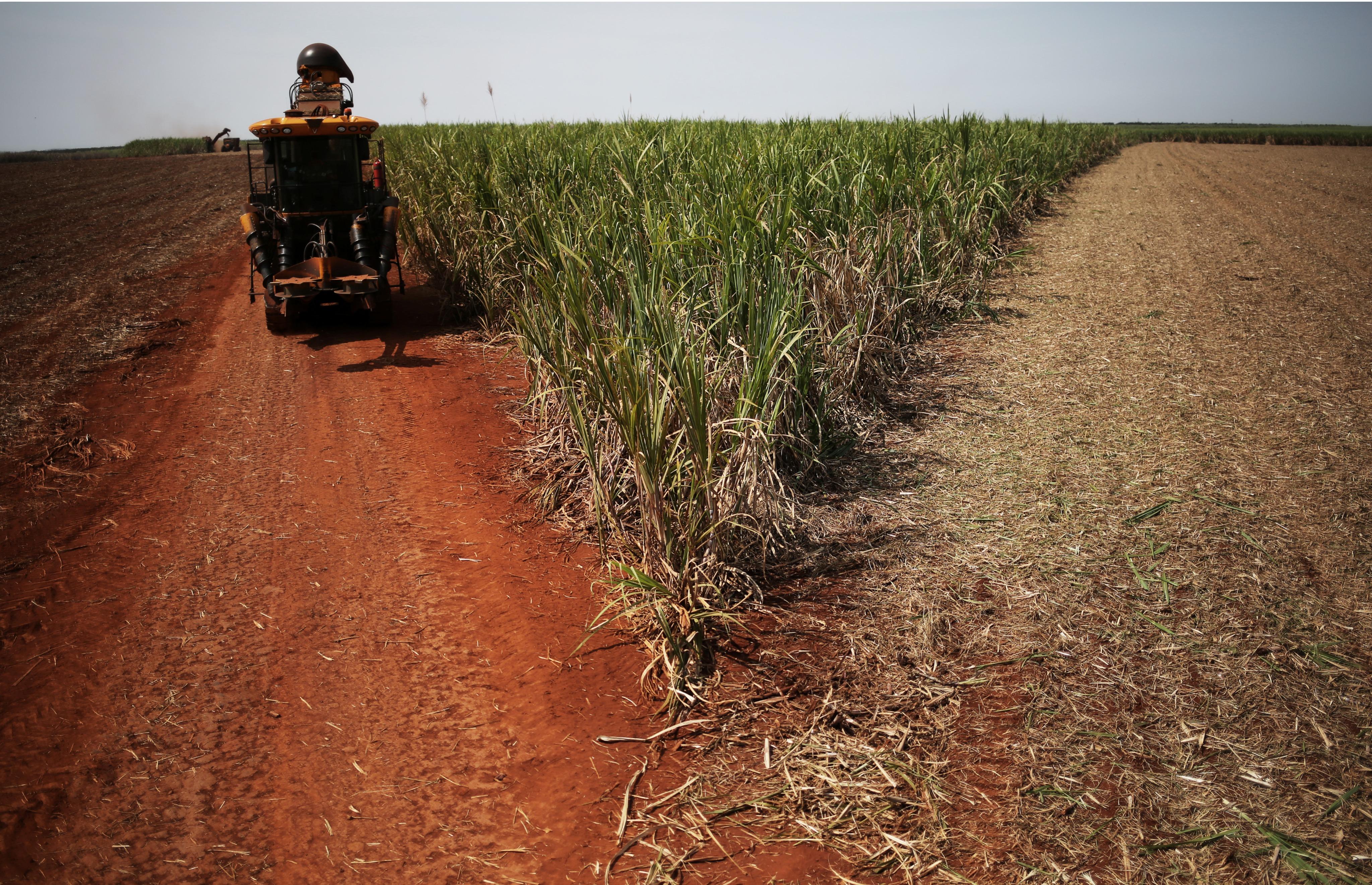 Colheita de cana-de-açúcar em usina em Ribeirão Preto (SP), no Brasil REUTERS/Nacho Doce