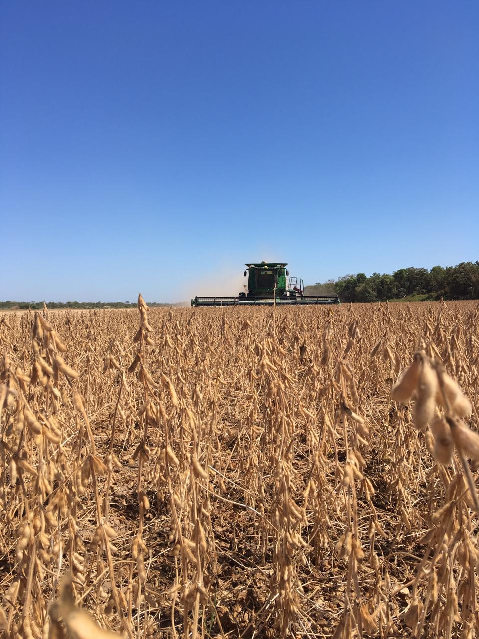 Colheita de soja para semente em Lagoa da Confusão (TO). Envio Agro Nova Aliança (Família Gasparetto)