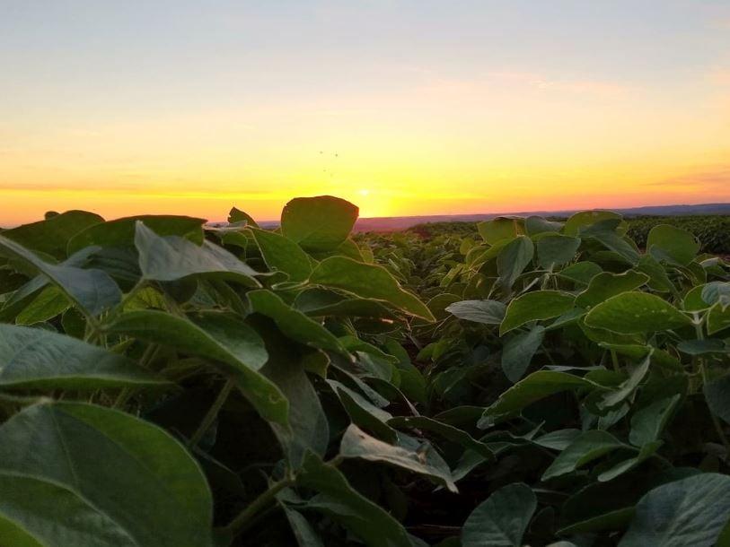 Pôr do sol em Nova Cantu (PR). Envio de Amauri José De Lazari