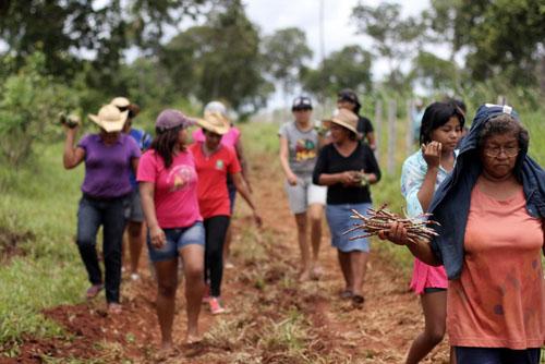Indígenas Terena resistem à reintegração - https://www.cimi.org.br/