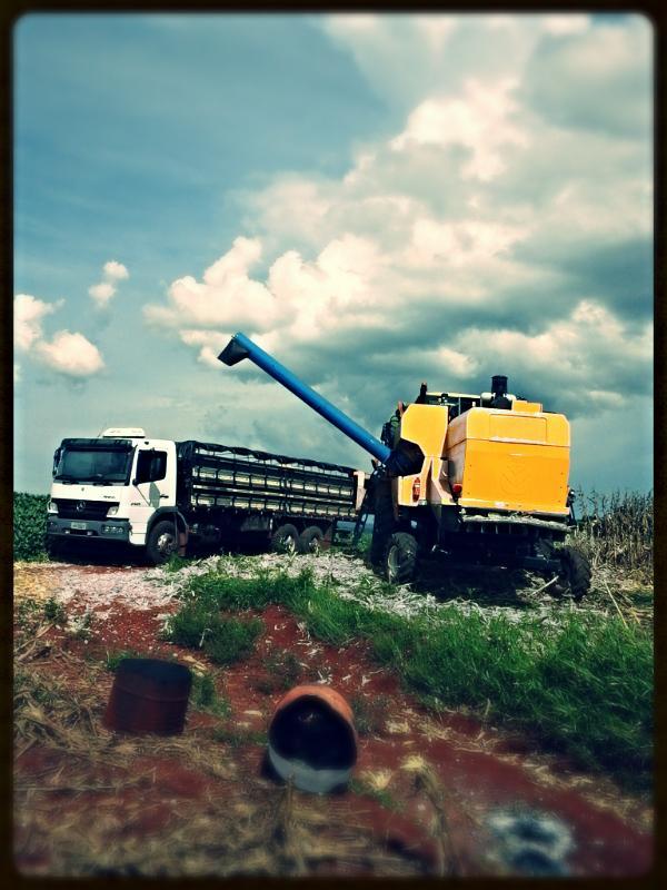 Imagem do sia - Colheita de Soja em Vila Hortência, Centenário (RS), do produtor Ernani Grziboski 3