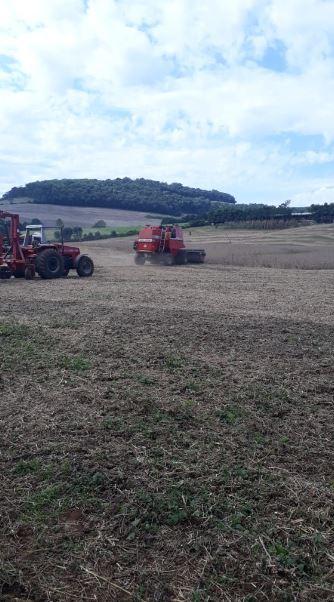 Final da colheita no sítio do produtor Ademir Remussi em São João da Urtiga (RS) Envio do Técnico Agrícola Robson Remussi