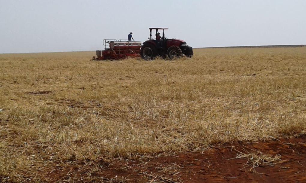 Início do plantio de soja em Nueva Esperanza - Paraguay. Envio de Solange Tramontin
