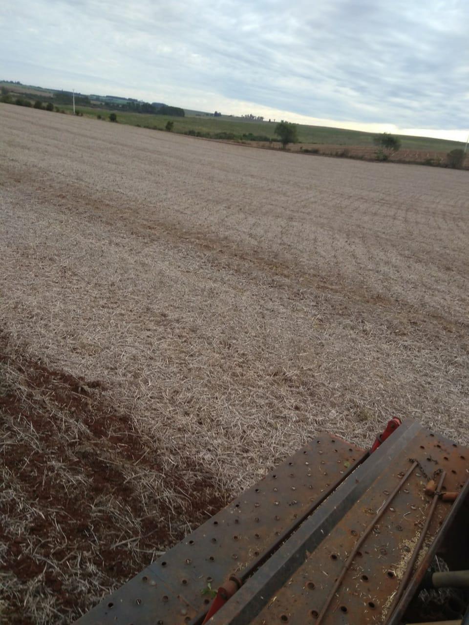 Plantio de aveia na Agropecuária Jacomina, em Passo Novo, Cruz Alta (RS)
