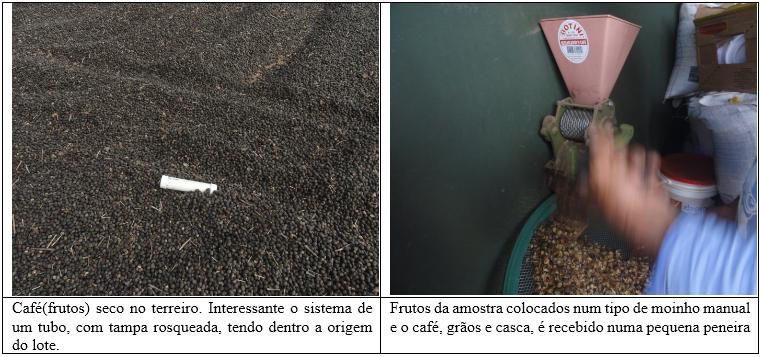 Procafé: Controle da seca e umidade do café é muito importante