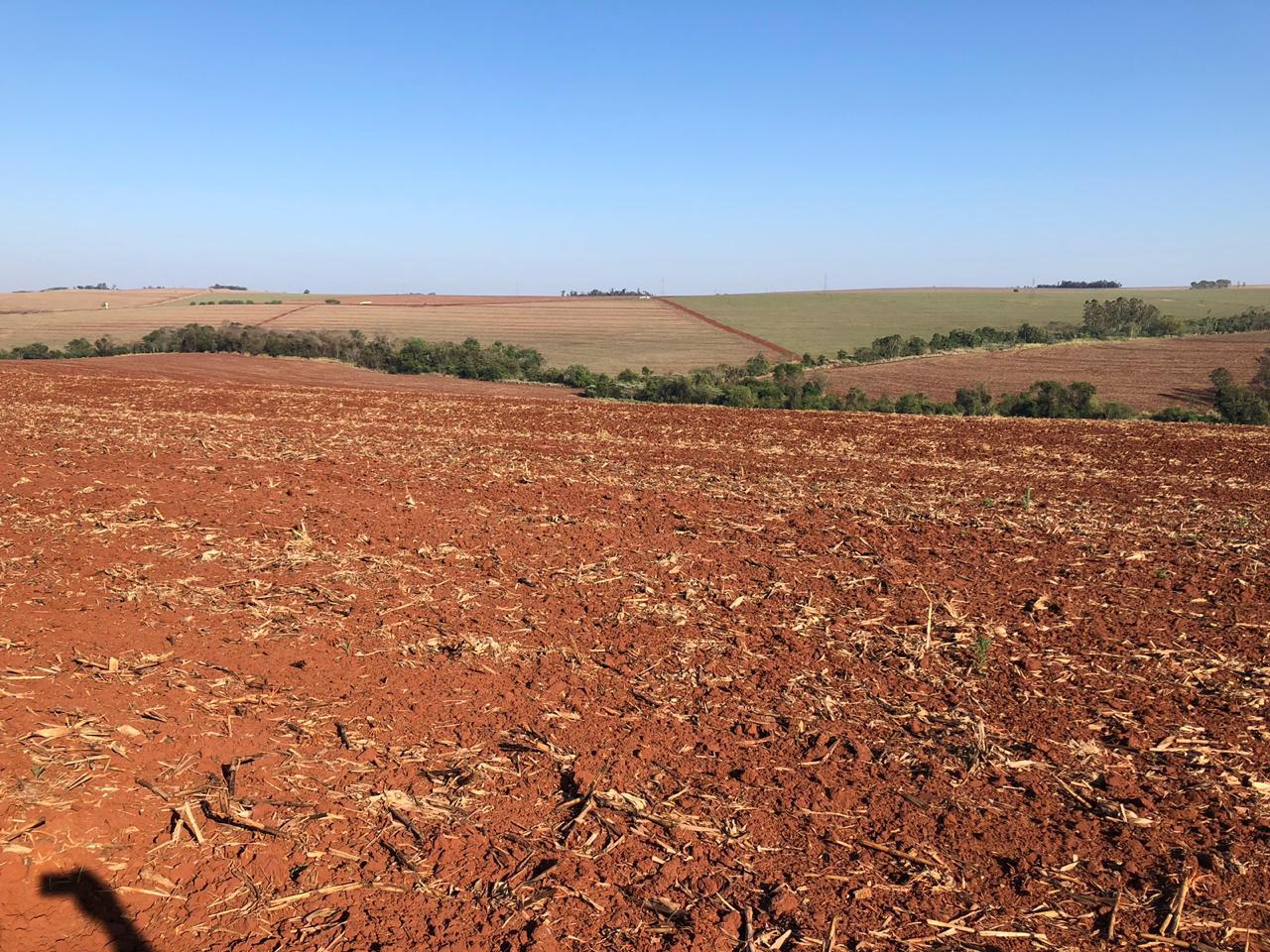 Plantio da soja perdido na região de Doutor Camargo (PR) - Foto: Ildefonso Ausec