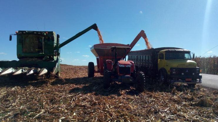 Colheita de milho safrinha da produtora Franciele Correia Ferreira em Assis Chateaubriand (PR). Envio de Marcelo Rodrigues de Oliveira