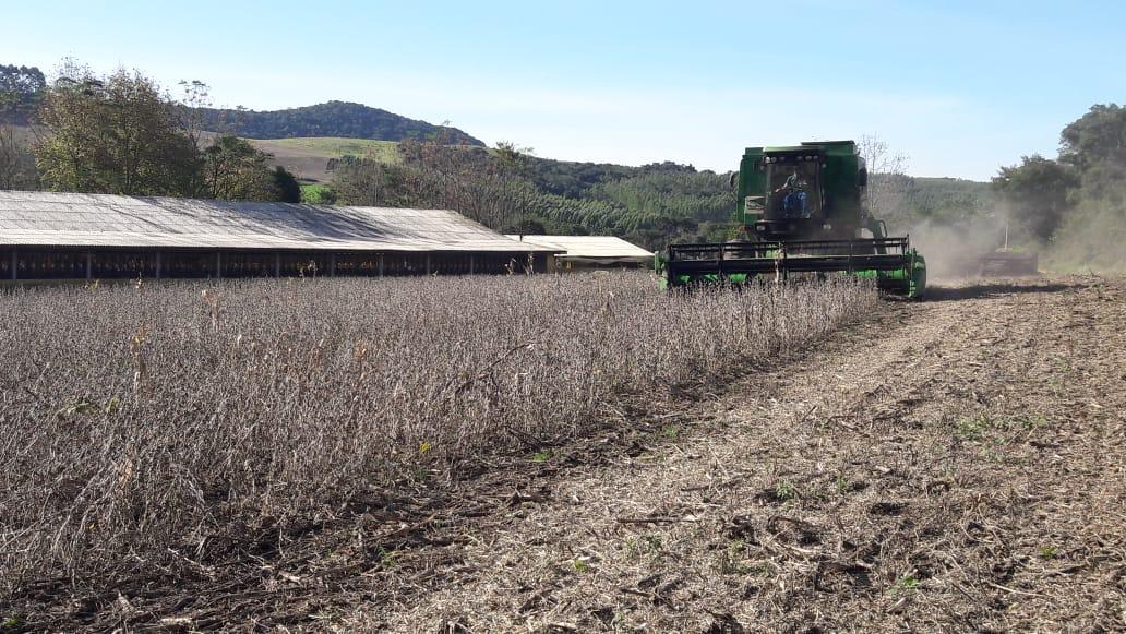 Final de colheita soja safrinha na Propriedade de Alencar Tecchio em Serafina Corrêa (RS). Envio de Alencar Tecchio.