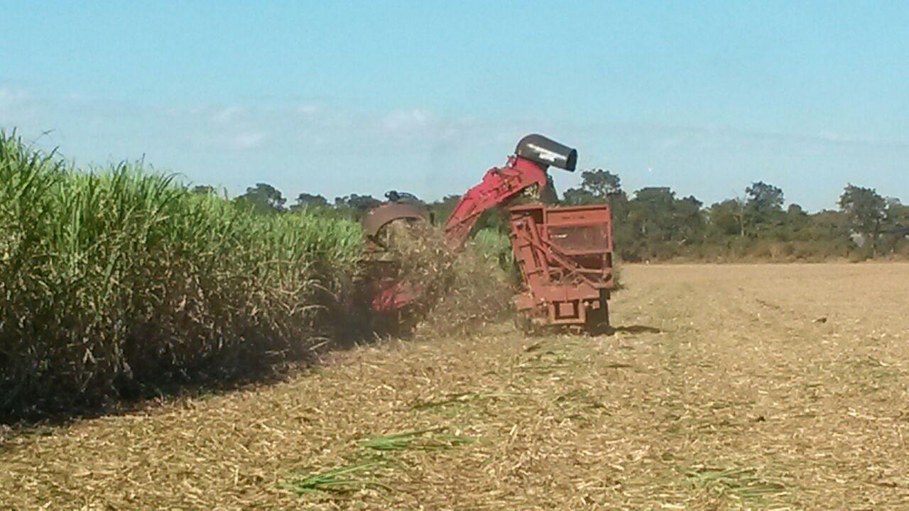 Imagem do dia - Colheita de cana-de-açúcar em Conceição das Alagoas (MG). Enviado por Agnaldo Fujimura