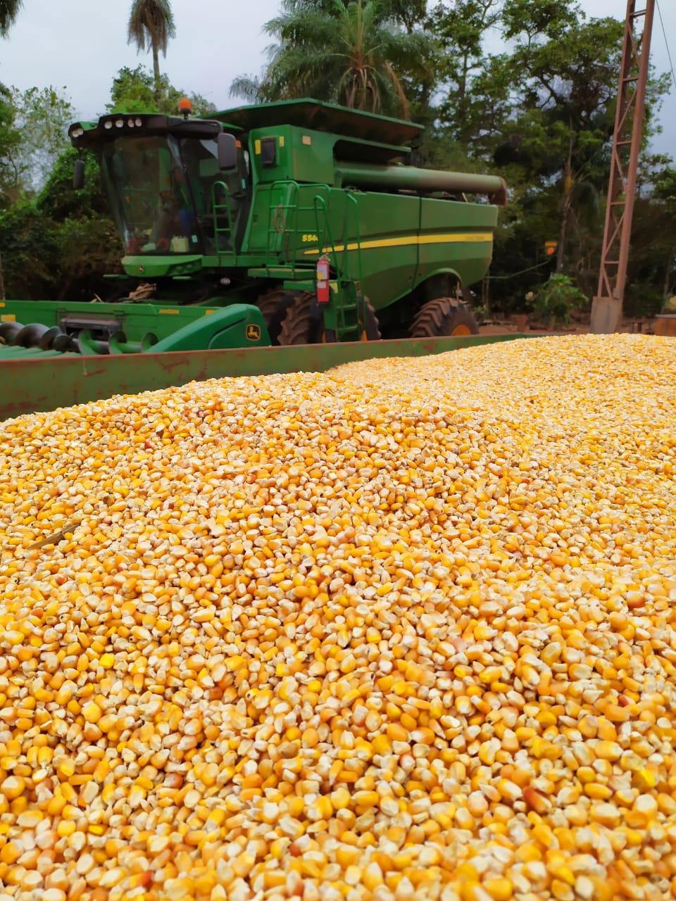 Finalizando a colheita do Milho Safrinha 2019 em Bonito (MS). Envido do Eng. Agrônomo Rafael Henrique.