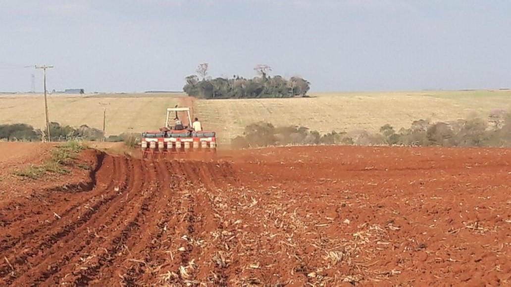 Plantio da soja no Paraná