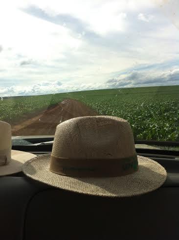 Imagem do dia - Lavoura de milho em Alvorada do Sul (PR), do produtor Antônio Rubens Gasparelli