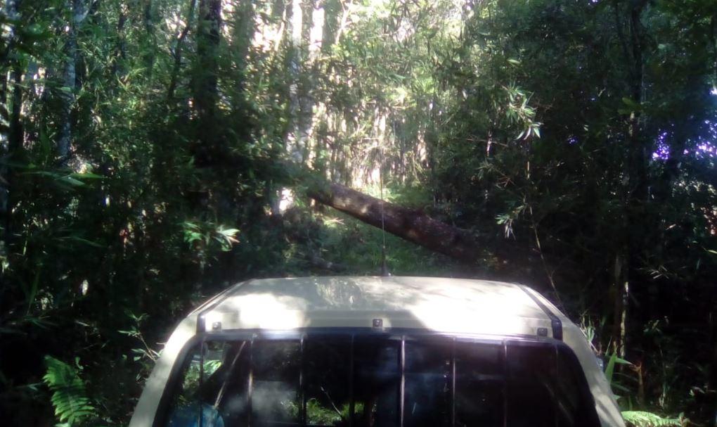 Vento forte derrubou árvores em Xavier da Silva - Itaiópolis (SC). Envio de Paulo Marcelo Adamek