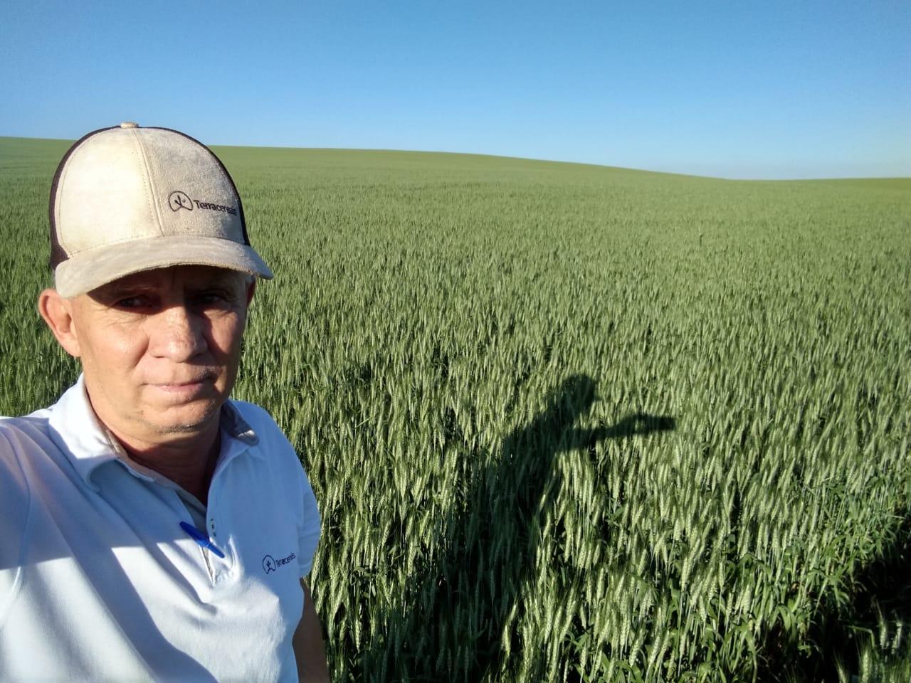 Trigo em Espigão alto do Iguaçu (PR). Envio do Consultor da Terra Cereais. Wilson De Itoz.