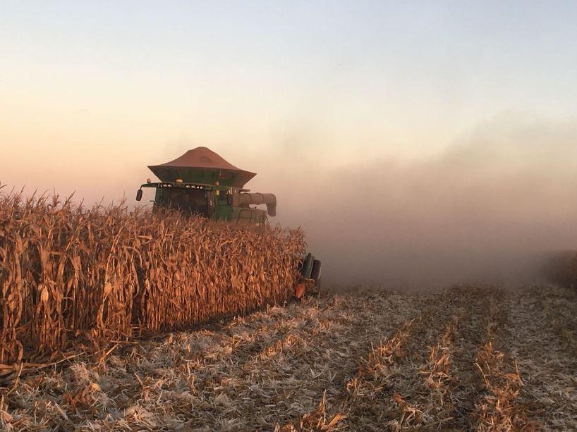 Colheita do milho safrinha em Chapadão do céu (GO). Envio de Vade Bernaski