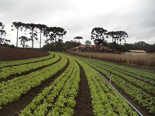 Hortaliças no Paraná