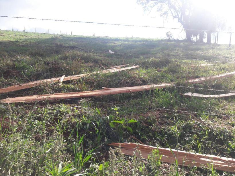 Estragos causados por raio na Fazenda Jaboticabal da família De Carli em Coronel Vivida (PR). Envio de Helio de Carli.