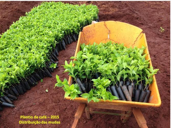 Imagem do Dia - Plantio de café na Fazenda Renascente em São Manuel (SP), envio de Adauto Martinez Filho