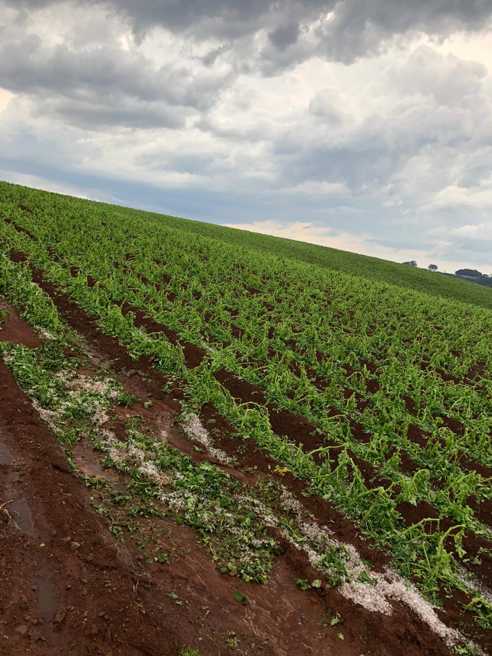 Registro de granizo em Caseiros (RS) - Foto: Reprodução/Redes sociais