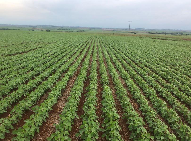 Lavoura de soja em Andirá (PR). Envio de Marcos Margotto Esteves