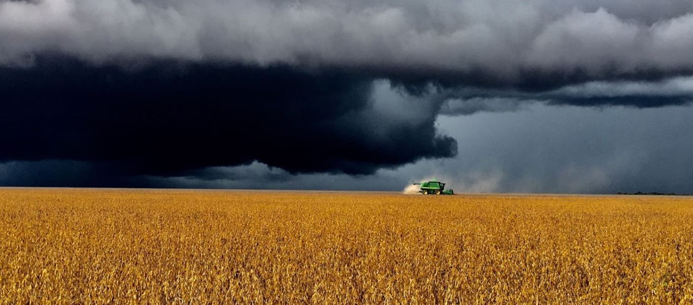 Chuva na colheita de soja em Currais (PI). Envio de Abel Pieta