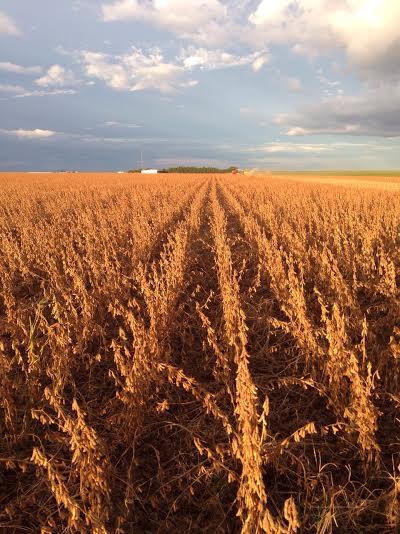 Imagem do dia - Colheita da soja na Fazenda Porto Alegre em São Desidério (BA). Envio do grupo Faccioni Agrícola