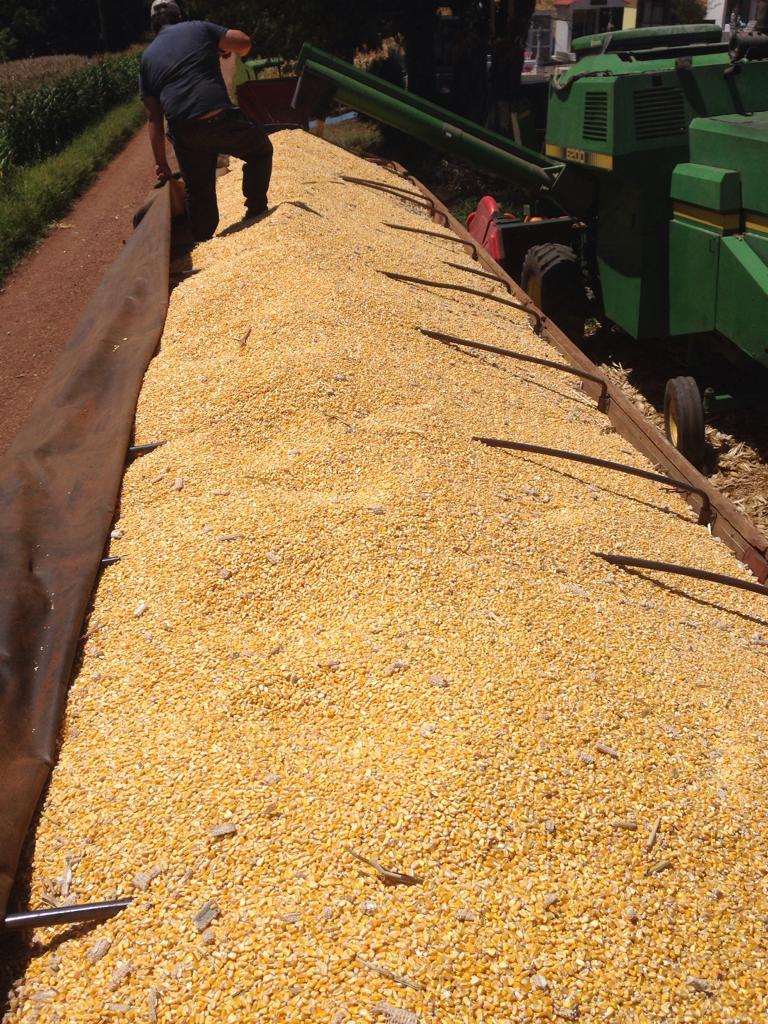 Colheita de milho dos produtores Marcos Colet e Tiago Colombo em Sarandi (RS)