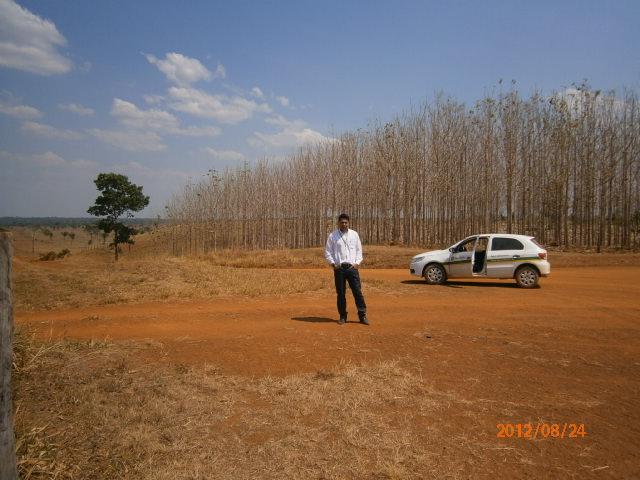 Imagem do dia - Plantação de Teca, em Juara (MT). Envio de Marcos Vettori