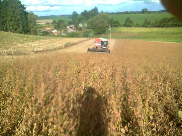Imagem do dia - Abertura da colheita da soja na granja Tomelero em Erebango (RS). Envio de Aldair Tomelero